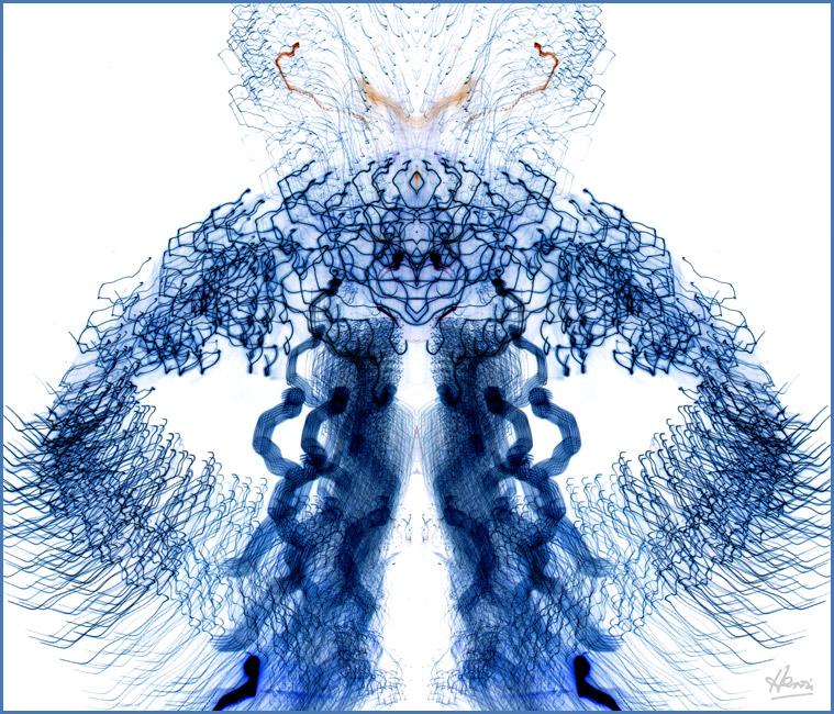 SPERMATAUSAURUS Image